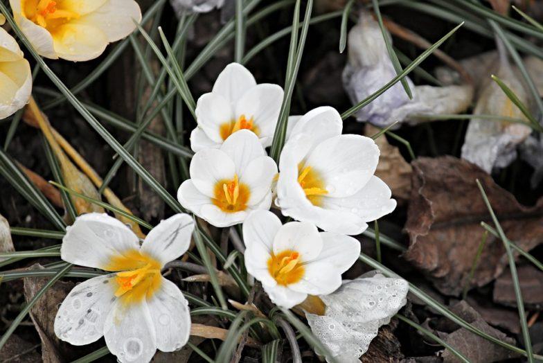 S prireditveno bogatim marcem prebujamo pomlad v slovenski Istri